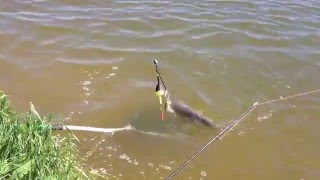 рыбалка в ростове на дону пеленгаса