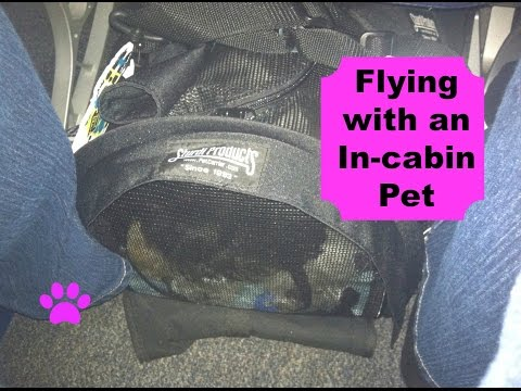 How to: Flying with an In-cabin Pet