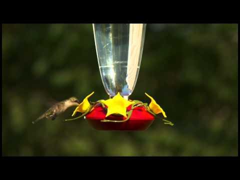 Perky-Pet® 24 oz. Top-Fill Plastic Hummingbird Feeder