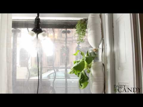 Windowfarms on Daily Candy- Vertical veggie farm in your apartment window