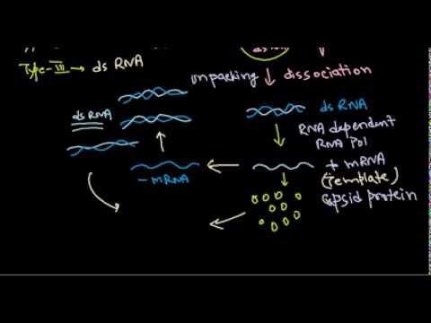 10  Replication of dsRNA virus