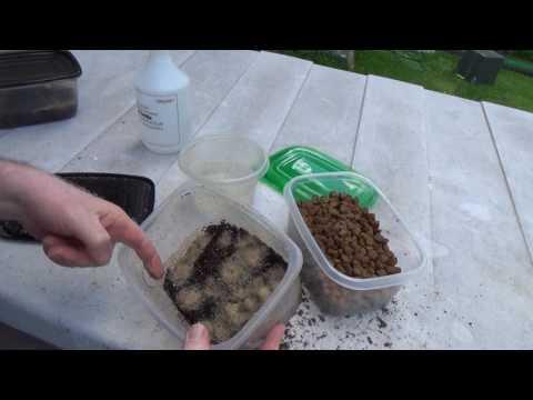 Grindal Worm Harvesting 2017-06-14