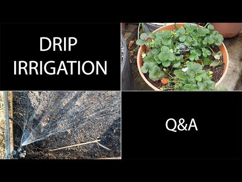 Drip Irrigation Questions Answered - Q&A For Drip Irrigation Systems