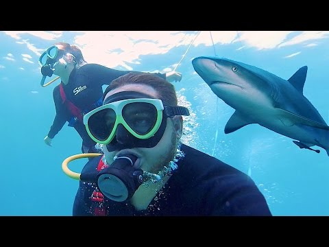 SWIMMING WITH SHARKS IN HAWAII!