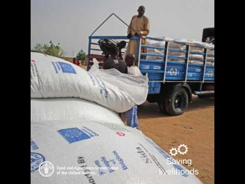 FAO emergency assistance in north-east Nigeria