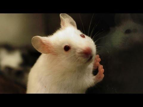 Scientists Created Stuttering Mice To Help People Who Stutter