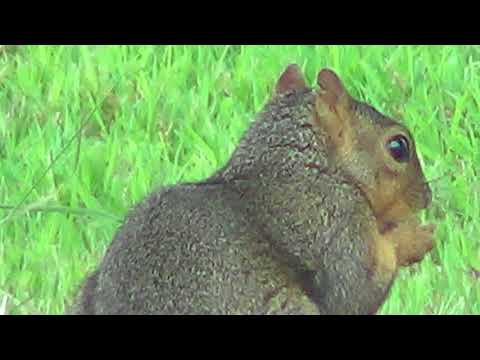 Some Nature Watch - Caught This Squirrel Eating The Bird's Sunflower Seeds