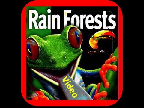 Rainforest  lesson for Kids