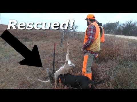 Hunters Save Deer that's Caught in a Barbwire Fence
