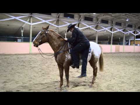 Mounting and Dismounting Your Horse Safely and Correctly