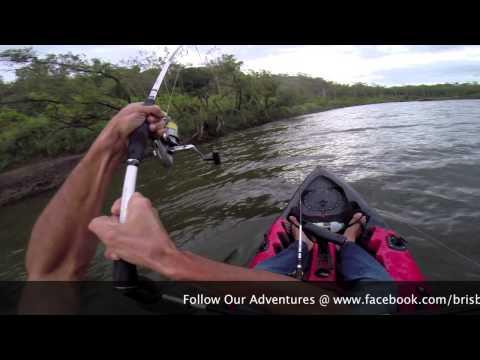 Brisbane River Bull Sharks On Dragon Kayaks