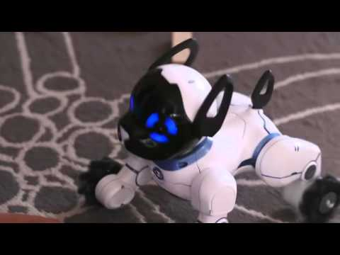 Meet CHiP The World's First Lovable Robot Dog