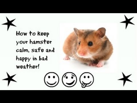 How to Keep your Hamster Calm, Safe and Happy in Bad Weather!