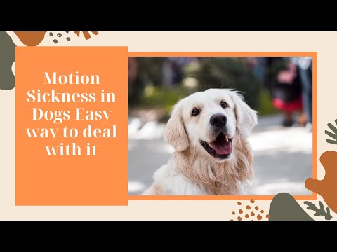 Motion Sickness in Dogs Easy way to deal with it