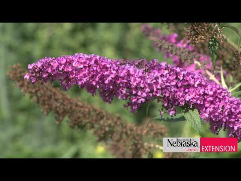 Butterfly Garden Tips