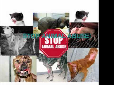 Animal Abuse Commercial