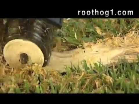 How to remove tree roots