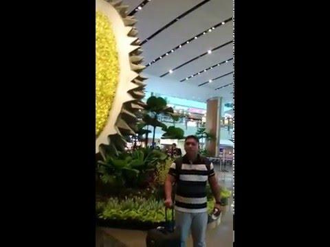 durian raksasa,Changi,TKI Singapura