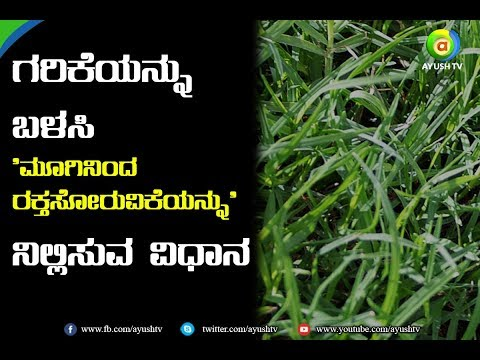 Home Remedy- How to stop 'Nose bleeding' with Bermuda grass/ಗರಿಕೆ ಹುಲ್ಲು| nose bleeding |home remedy