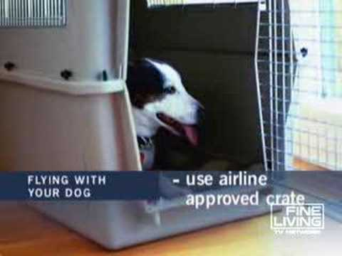 Air Travel with Your Dog