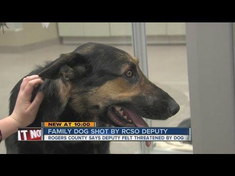Family finds dog bleeding from gunshot wound on front porch