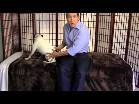 Dog Hip Pain Relief