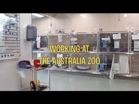 Working at The Australia Zoo