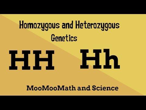 Homozygous vs Heterozygous Genotype