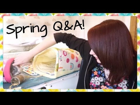 Spring Q&A 2017!   Squeak Dreams