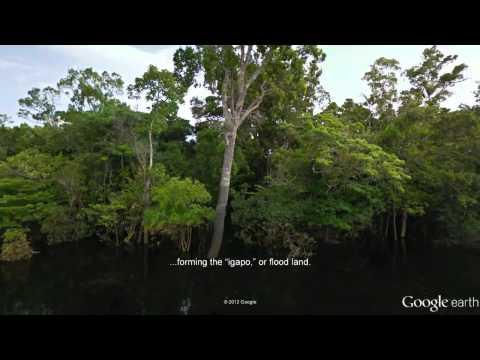 Street View for the Amazon - Tour of the Rio Negro