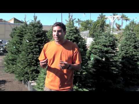 Mission Hills Nursery Live Christmas Trees