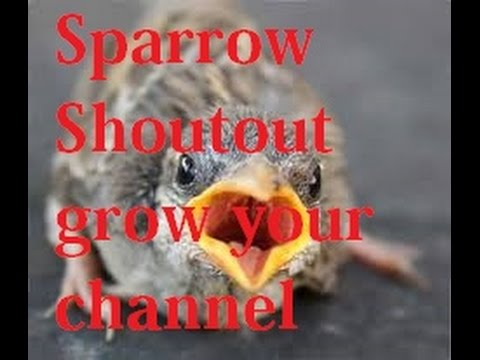SHOUTOUT LIVE !!!GROW CHANNEL FAST!!! (GET ON THE BOARD) MAKE FRIENDS CHAT!!!