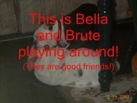 My good dog, Bella