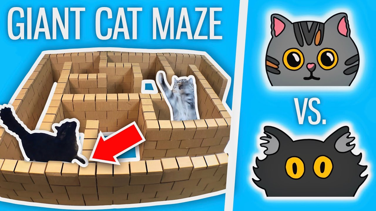 Ralph Vs. Bella - GIANT Cat Maze