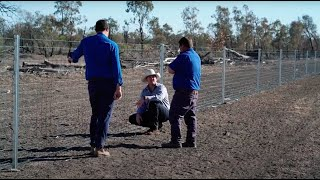 Waratah boundary fence delivers cropping benefits from feral animals