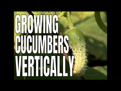 1-2-3 Done! - Building a Cucumber Trellis