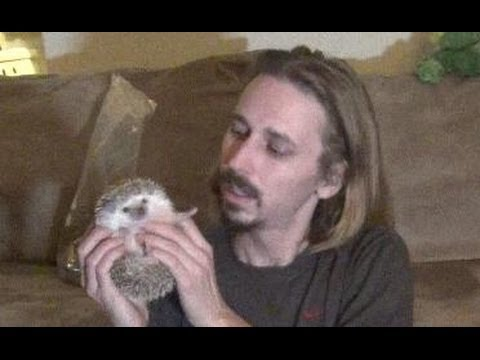 Pet Hedgehog? Watch This FIRST!