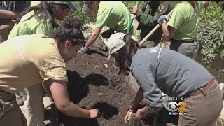 Teen Mentoring Program Will Make The Streets Of LA More Green