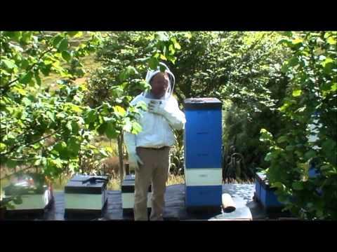 Stewart Family Honey Harvest - 24 November 2012