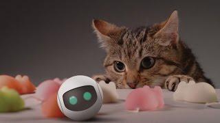 Most Smartest Gadgets For Your Pet