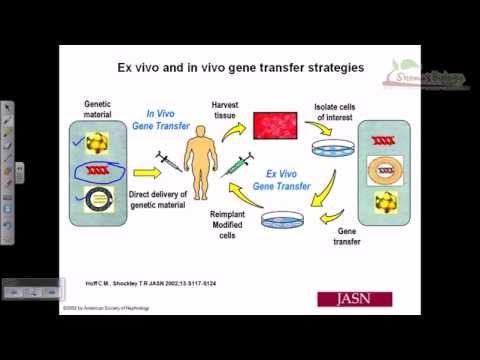 Gene therapy lecture 3 | in vitro gene therapy