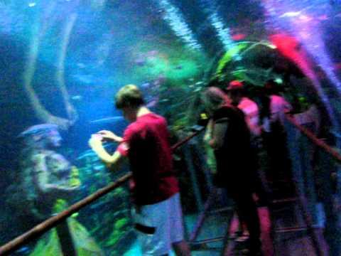 Sea life center Birmingham