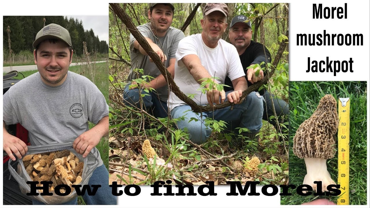 How to find Morel Mushrooms and finding the motherload