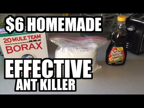 FAST Sugar Ant Killer Recipe