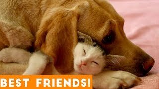 Cutest Animal Friendships Compilation 2018  Funny Pet Videos