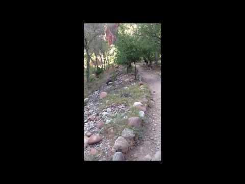 Bright Angel Campground