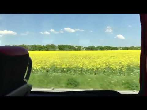 Denmark - Driving Past a Field of Yellow Flowers (2018)