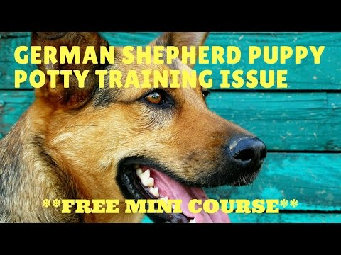 German Shepherd Puppy Potty Training Issue Tips ++ FREE MINI COURSE ++