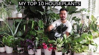 My Top 10 Favorite Houseplants   Fall 2018