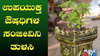Get To Know The Health Benefits of Tulsi Or Holy Basil